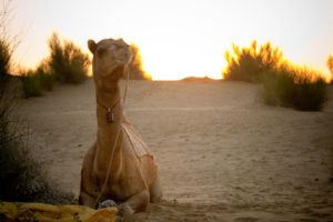 Jaisalmer-packages